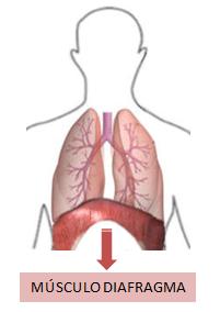 respiração diafragmatica